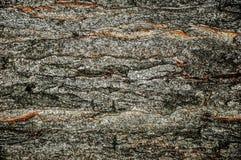 Texturas de uma árvore Texturas do fundo para o projeto foto de stock royalty free