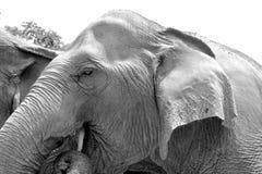 Texturas de uma pele do elefante fotografia de stock