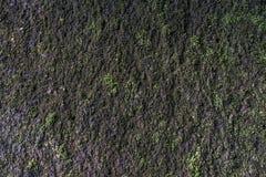 Texturas del musgo Foto de archivo libre de regalías