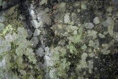 Texturas del musgo y de la pared del molde Imágenes de archivo libres de regalías