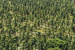 Texturas do coco Imagens de Stock Royalty Free