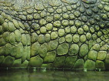 Texturas do crocodilo foto de stock