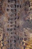 Texturas do fundo da pele do crocodilo Close-up r?pteis Amarelo acastanhado da textura de couro escamoso imagem de stock