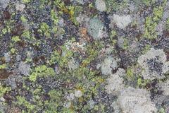 Texturas do líquene fotografia de stock