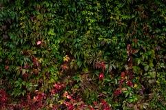 Texturas do outono, folhas amareladas, lentilha-d'água, conversão imagens de stock royalty free