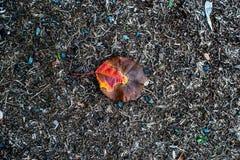 Texturas do outono, folhas amareladas, lentilha-d'água, conversão fotos de stock