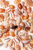 Texturas do Seashell fotografia de stock