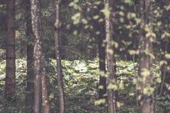 texturas do tronco de árvore no ambiente natural - efeito retro do vintage imagem de stock