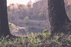 texturas do tronco de árvore no ambiente natural - efeito retro do vintage foto de stock royalty free