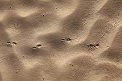 Texturas do vento na areia fotos de stock