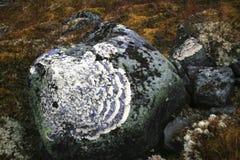 Texturas dos líquenes, Ural, stouns, ornamento Foto de Stock