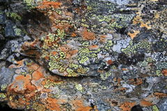 Texturas dos líquenes, Ural, stouns, ornamento Imagem de Stock