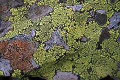 Texturas dos líquenes, Ural, stouns, ornamento Imagem de Stock Royalty Free
