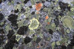 Texturas dos líquenes, Ural, stouns, ornamento Fotografia de Stock Royalty Free