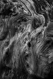 texturas e formas de madeira Imagens de Stock
