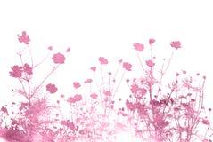 Texturas e fundos abstratos da flor Imagens de Stock