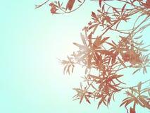 Texturas e fundos abstratos das plantas Imagens de Stock