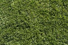 Texturas e fundos abstratos: Grama verde Imagens de Stock