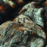 Texturas e madeira da floresta imagem de stock royalty free