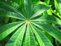 Texturas e testes padrões das folhas verdes quando a luz solar brilhar no ev imagens de stock royalty free