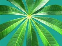 Texturas e testes padrões das folhas verdes quando a luz solar brilhar no ev fotografia de stock
