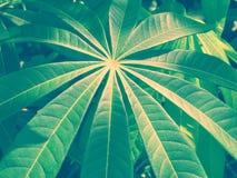 Texturas e testes padrões das folhas verdes quando a luz solar brilhar no ev imagens de stock