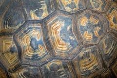 Texturas e testes padrões das tartarugas Fotografia de Stock