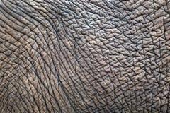 Texturas e testes padrões de elefantes asiáticos fotografia de stock royalty free