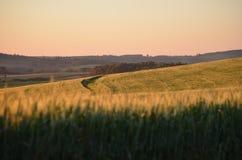 Texturas em um campo de trigo fotografia de stock