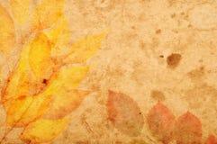 Texturas florais do estilo Fotografia de Stock Royalty Free