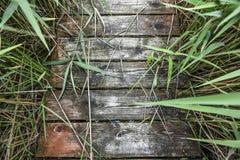 Texturas, fundo de placas de madeira velhas, com plantas verdes Imagens de Stock Royalty Free