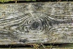 Texturas, fundo de placas de madeira velhas, com plantas verdes Imagens de Stock