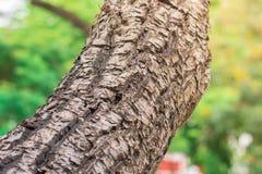 Texturas gigantes da casca de árvore com luz solar amarela Papel de parede do foco seletivo imagens de stock