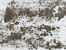 Texturas preto e branco do assoalho do cimento fotos de stock