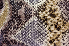 Texturas - Snakeskin Fotos de archivo