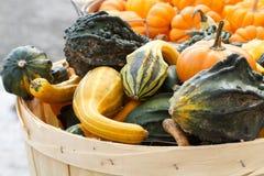 Texturas, testes padrões, e formas bold(realce) dos Gourds Fotos de Stock Royalty Free