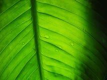Texturas verdes Imagem de Stock Royalty Free