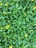 Texturas verdes do fundo Foto de Stock
