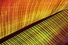 Texturas y color de la hoja Foto de archivo