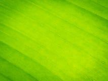 Texturbakgrund av det gröna bladet Arkivfoto