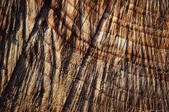 Texturdetalj av klippt trä Royaltyfri Foto