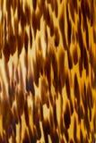 Texture élégante d'un animal tropical sauvage images stock