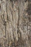 Texture 2 d'écorce d'arbre Photos libres de droits