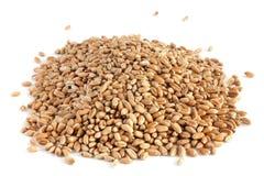Texture 2 de blé Image stock