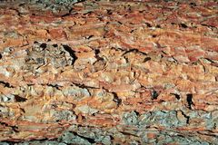 Texture. Pine tree bark texture 1 Stock Photos