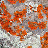 Texture. Image of texture with colorful mineral Royalty Free Stock Image