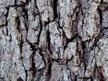 Texture, abstract, trunk of a tree or rock, I`m not sure Stock Image