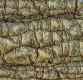 Texture abstraite d'écorce d'arbre Fond d'un arbre naturel Image stock