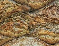 Texture abstraite d'écorce d'arbre Fond d'un arbre naturel Photographie stock
