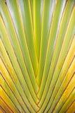Texture abstraite de branches de palmier Images libres de droits